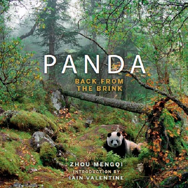 Panda: Back from the Brink (fixed layout), Zhou Mengqi