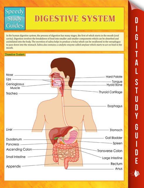 Digestive System Speedy Study Guides, Speedy Publishing