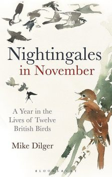 Nightingales in November, Mike Dilger