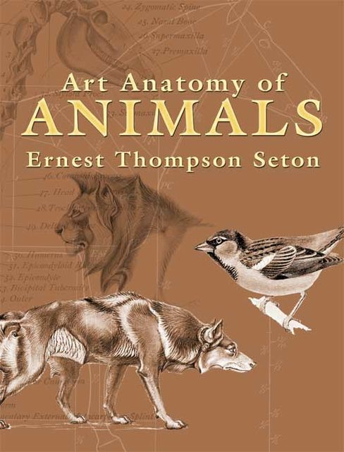 Art Anatomy of Animals, Ernest Thompson Seton