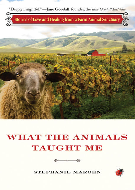 What the Animals Taught Me, Stephanie Marohn