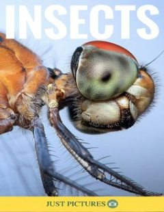 Insects, Just Pictures