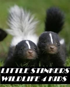 Little Stinkers Wildlife 4 Kids, Animal, Nature 4 Kids