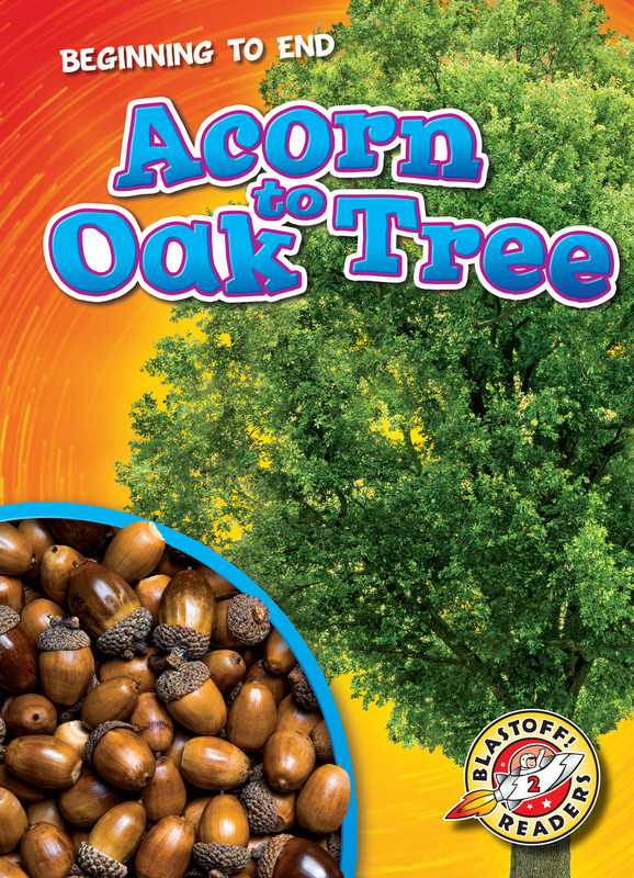 Acorn to Oak Tree, Elizabeth Neuenfeldt