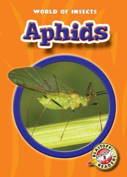 Aphids, Colleen Sexton