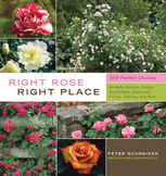 Right Rose, Right Place, Peter Schneider
