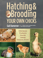 Hatching & Brooding Your Own Chicks, Gail Damerow